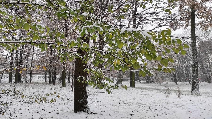 03-12-2020 11:00 Zachodnia Polska zasypana śniegiem. Drogi i chodniki są bardzo śliskie, a krajobrazy przeurocze [ZDJĘCIA]
