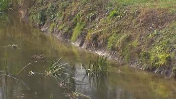 Śnięte ryby i martwe bobry w Huczwie. Podejrzenie zatrucia rzeki